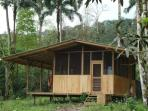 Howler Monkey Cabin next to the Jungle!