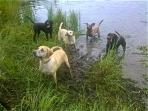 Wet Dog Ranch