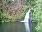 Magical Waterfall Estate - Mika Taki - In the Heart of Hilo