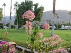 CAR8 - Rancho Las Palmas Country Club - 3 BDRM, 2 BA