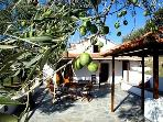 DROSIA COTTAGE - Cute private house in olive grove