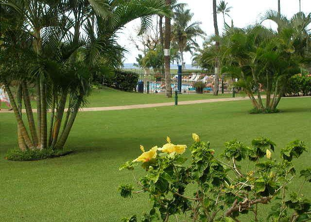 MS 112A Grounds - Maui Sunset 112A ~ 1 Bedroom/2 Bath, Ground Floor, Ideal for Families! - Kihei - rentals