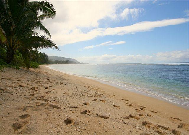 Beautiful Sandy Beach - Directly oceanfront, beach to yourself, 2 bedrooms, incredible reviews - Haleiwa - rentals