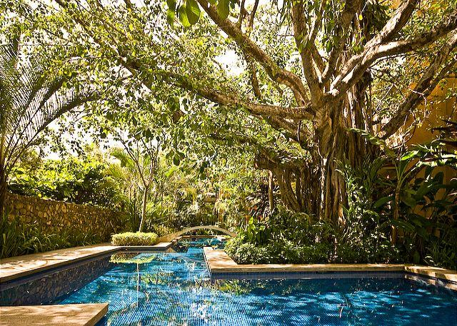 Pool and Banyan - Luxurious penthouse- kitchen, cable, gas grill, a/c, private terrace w/Jacuzz - Tamarindo - rentals
