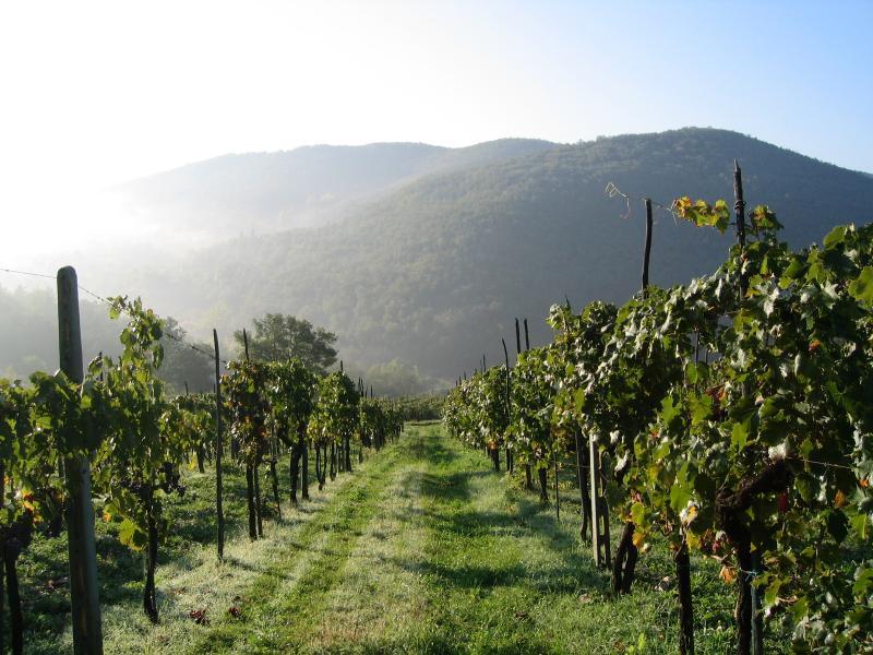 Luxury Chianti Villa on a Wine Estate - Villa Panzano - Image 1 - Panzano In Chianti - rentals