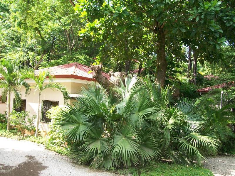 Costa House - Image 1 - Nosara - rentals