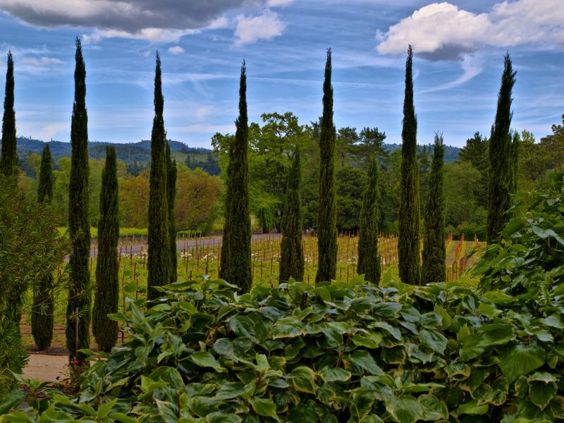 View from Shady Oaks - Shady Oaks Inn in the Vineyards in Napa Valley - Saint Helena - rentals