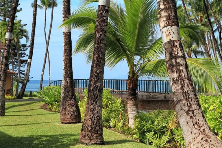 Comfortable House with 3 BR & 3 BA in Lahaina (Puamana 48-2 (3/3) Standard GV) - Image 1 - Lahaina - rentals
