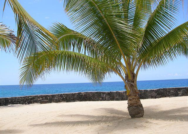 Beach area by the salt water pool - Hale Ano - Casa de Emdeko 103 - AC Included! - Kailua-Kona - rentals
