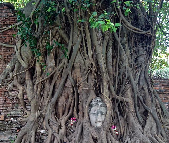 ancient Buddha that a tree grew around - chiang mai SHORT & LONG TERM apartment rental by o - Chiang Mai - rentals