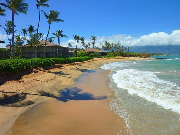 Is Sugar Cove on the beach?  You bet it is! - Sugar Cove, beachfront Spreckelsville, Paia - Spreckelsville - rentals