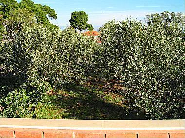 A1(2+2): terrace view - 00519PREK A1(2+2) - Preko - Preko - rentals