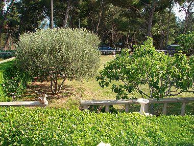 garden (house and surroundings) - 03801BOL A3(5) - Bol - Bol - rentals