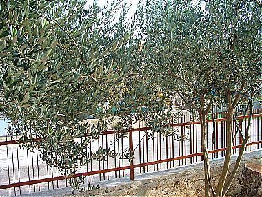 garden (house and surroundings) - 00405BIOG A2(6+2) - Biograd - Biograd - rentals