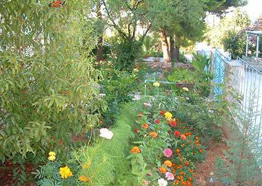 garden (house and surroundings) - 04701SUPE R1(3) - Supetar - Supetar - rentals