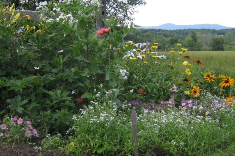 Midsummer flowers frame the magnificent mountain view. - Clifford Country Bed & Breakfast, open May-October - Mount Holly - rentals
