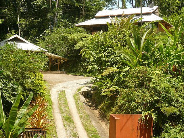 Entrance - OceanView-Beach 300yds-Comfort in the Rainforest ! - Punta Uva - rentals