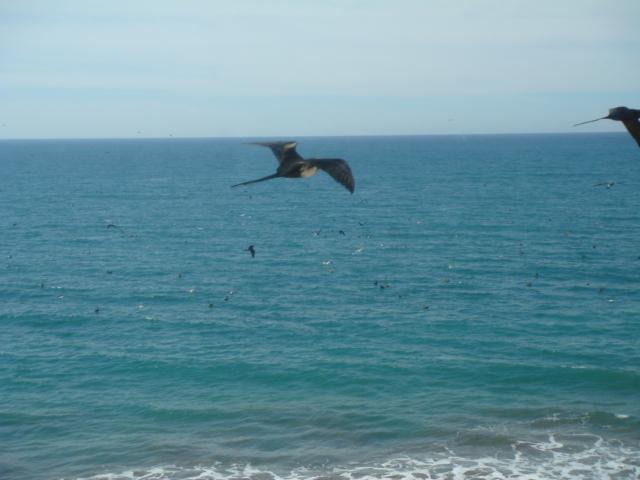 Living Room View - Endless Ocean and Sky!!! - Mazatlan - rentals