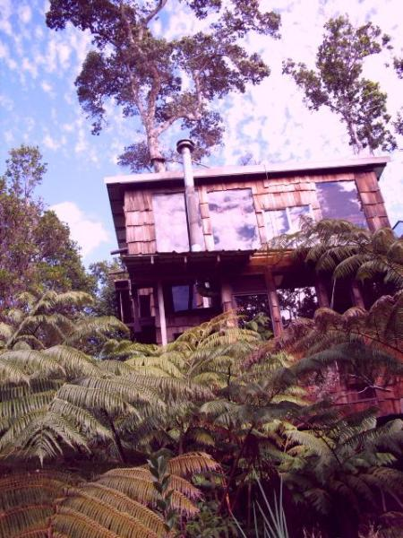 Trees go though the Treehouse and out the top - Hawaii Volcano Genuine Treehouse rental - Volcano - rentals