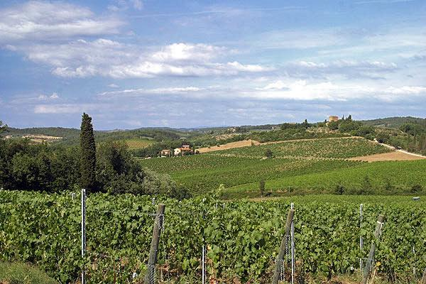Two Chianti Farmhouses for Large Group on a Wine Estate - Casa del Grano and - Image 1 - Barberino Val d'Elsa - rentals