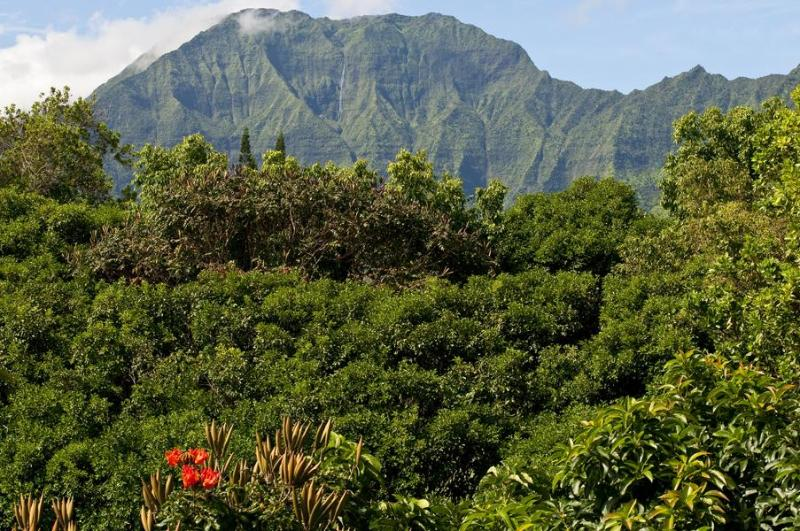 Mountain view from lanai over fragrant and gorgeous tropical greenbelt - Waterfall, TreeTop, Bali Hai View - Walk to Beach! Aloha Throughout! - Princeville - rentals