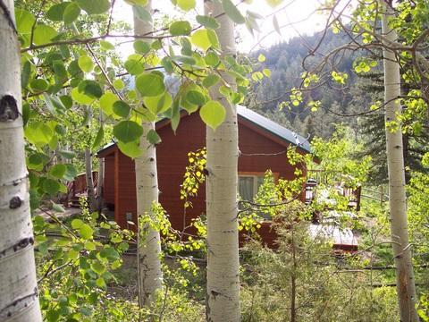 Summer at Spruce Ridge Guest Cabin - Spruce Ridge Guest Cabin - Salida - rentals