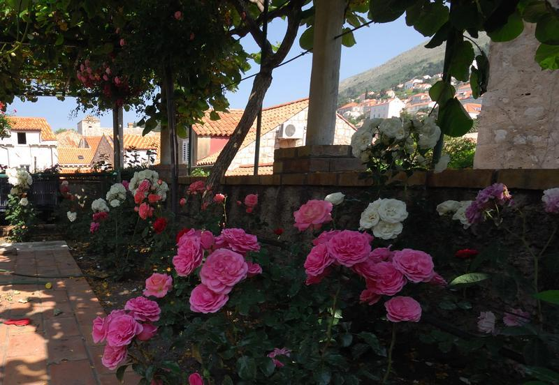 Garden - Family house fascination studio apartment - Dubrovnik - rentals