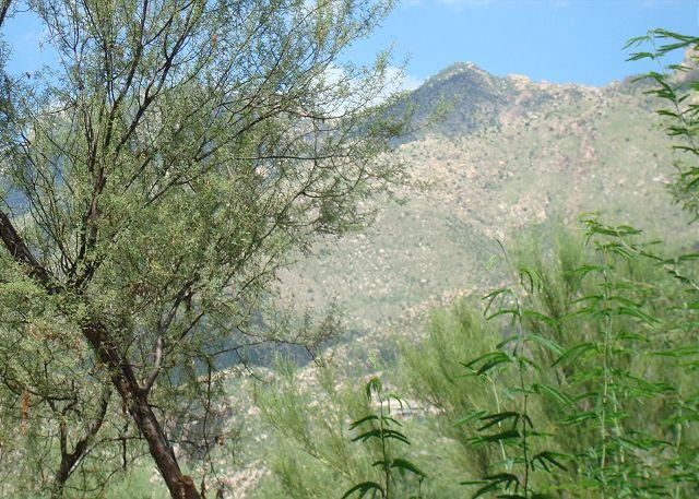 Patio View - First Floor Condo with Mountain Views - Tucson - rentals