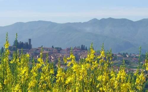 Il Trebbio colour - 3 bedrooms holiday villas in Barga Tuscany, Lucca - Barga - rentals