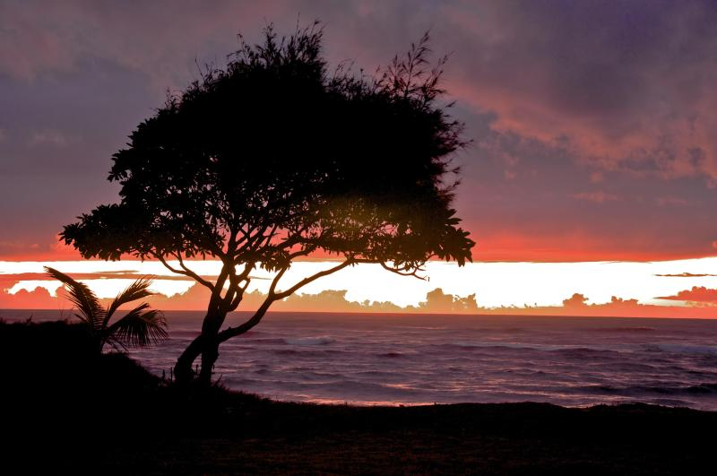 sunrise - Ground floor, check out the view!, 30 seconds to our beach, - Kapaa - rentals