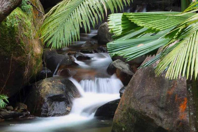 Private waterfalls spilling into your natural swimming pool. Swim under for a shoulder massage. - Daintree Secrets Award Winning Retreat - Daintree - rentals