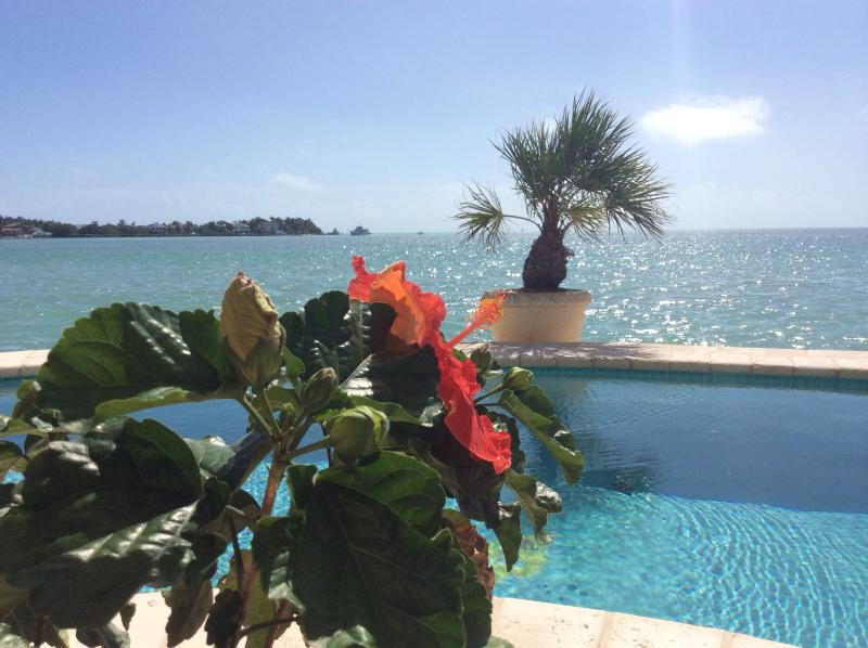 Nothing but Direct Atlantic Ocean in front of you - PEACE HAPPINESS,SUNSHINE N JOY ... 3  BED. 3 BTH. DIRECT OCEANFRONT  WITH HEATED POOL - Marathon - rentals