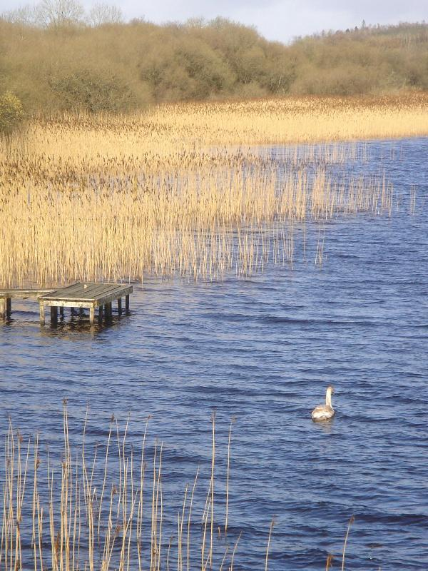 Lough Erne foreshore teeming with wild life. Swans, herons and geese regularly grace the foreshore - Mayfly Lodge Lough Erne - Kesh - rentals