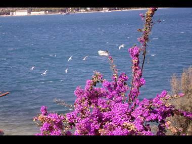 SA3(2): sea view - 2930  SA3(2) - Arbanija - Arbanija - rentals