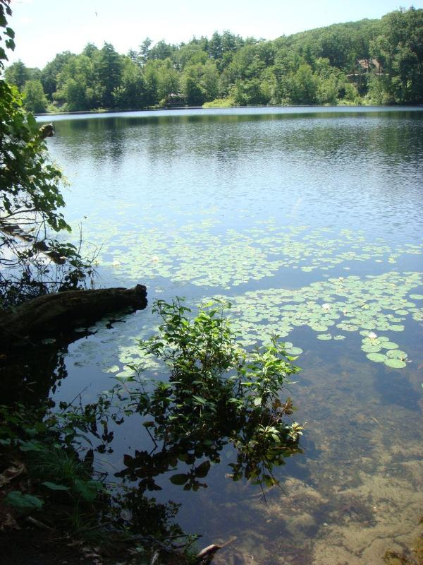 view of lake - Private Lakefront home in Woods, Belchertown, MA - Belchertown - rentals