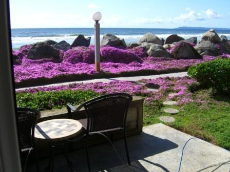 Beach Front Patio View - Beach Front~Best Kept Secret ~Steps To The Beach!! - San Diego - rentals
