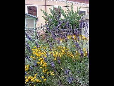 SA2(2): greenery - 3353 SA2(2) - Mali Losinj - Mali Losinj - rentals