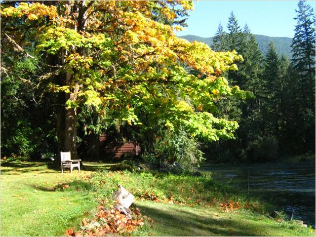 Fall Afternoon - Cowichan Riverside Cottage - Lake Cowichan - rentals
