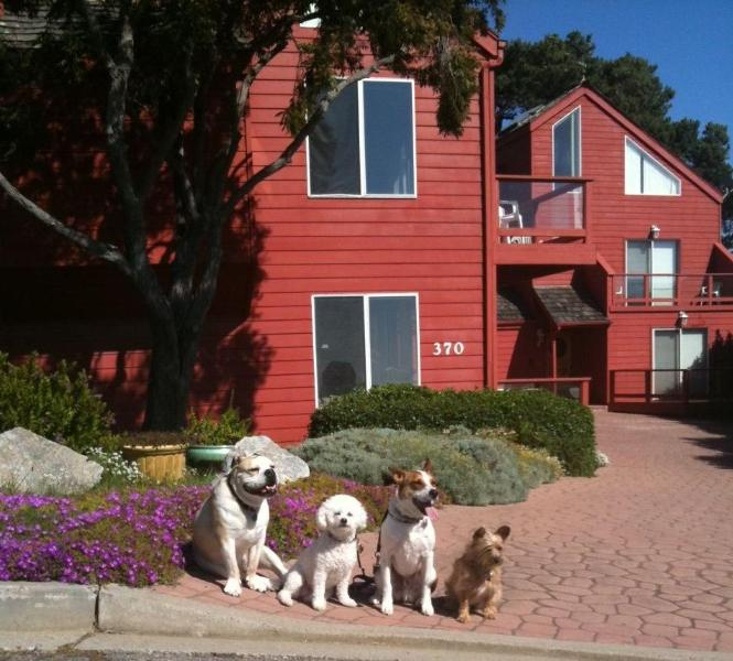 Welcome to the Big Red House - Ocean View and Dog-Friendly Home - Cambria - rentals