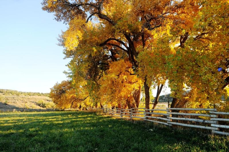 Ranch in the fall - Canyon of the Ancients Guest Ranch near Mesa Verde - Towaoc - rentals