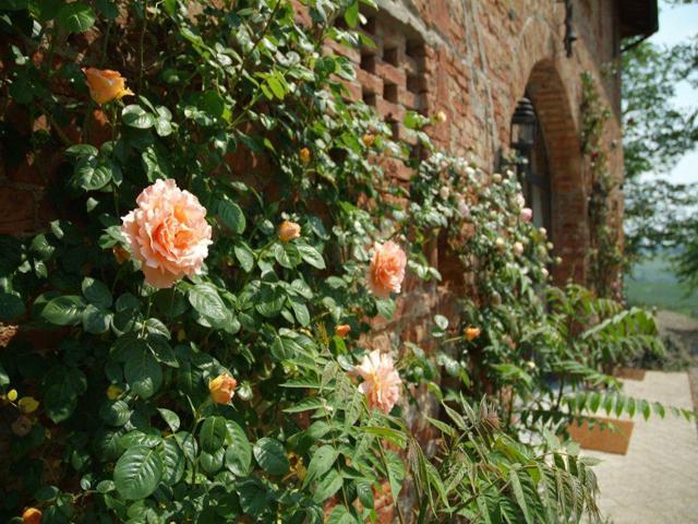 Cimabue - Image 1 - Canneto - rentals