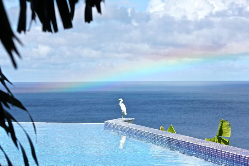 Our friendly heron enjoying the rainbow - Exclusive, total privacy and luxurious. - Nevis - rentals