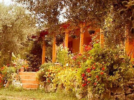 The Olive Farm - The Olive Farm - sea views- set in 400 olive trees - Kiparissia - rentals