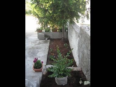 SA(2+1): flowers - 4313  SA(2+1) - Supetar - Supetar - rentals