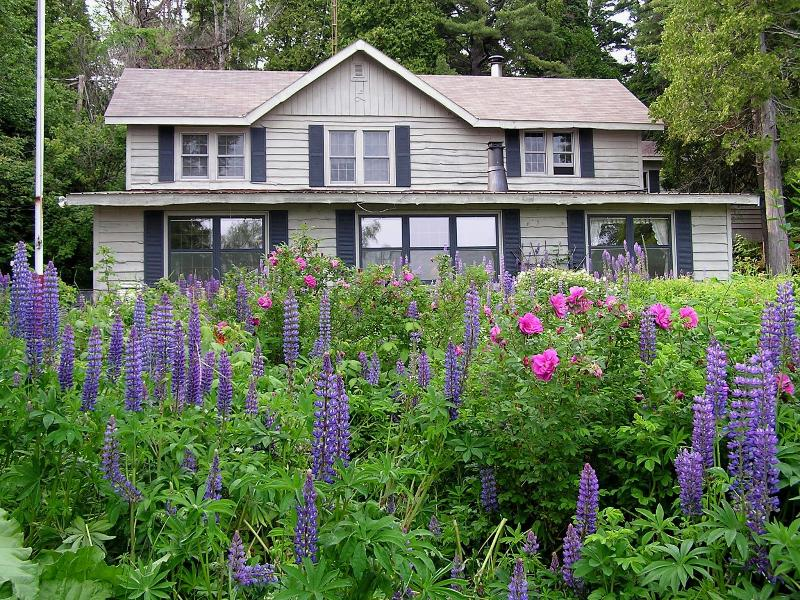 Lupine Lodge on Lake Superior in June - Lupine Lodge on Lake Superior - Two Harbors - rentals