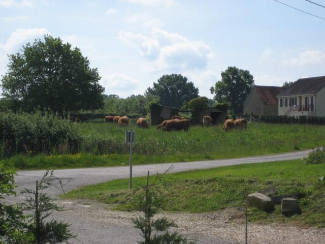 The Village Pond - La Miniere Gite, Argenton Sur Creuse, Limousin - Chemille Sur Indrois - rentals