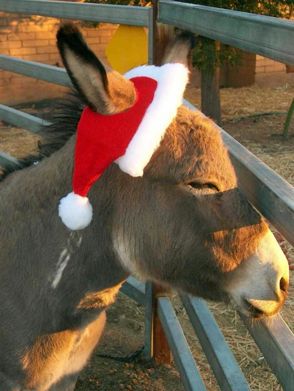 This is Quill...Our Rescue Donkey!! - The Bed and Burro Inn - Tucson - rentals