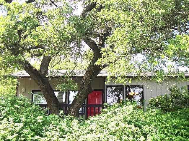 Surrounded by trees, sunshine and shade! - Kaleido House - uniquely Austin 2/1 near Zilker,DT - Austin - rentals