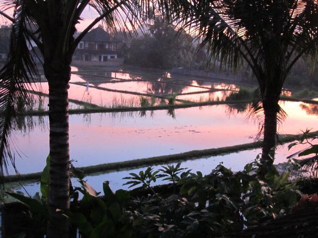 View of ricefields at sunset from upstairs balcony - Villa Sugarbush, Nyuh Kuning Village, Ubud - Ubud - rentals