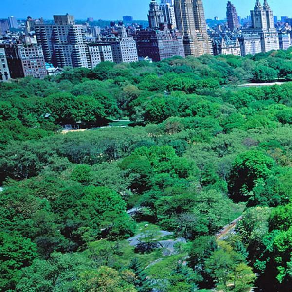 Your View - Three Bedroom Residence (Suite 1101-62) - New York City - rentals